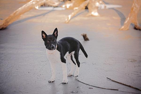 © Brooke Ashley Photography  | lifestyle-family-puppy-photography, Savannah-on-location-dog-portraits, beach puppy