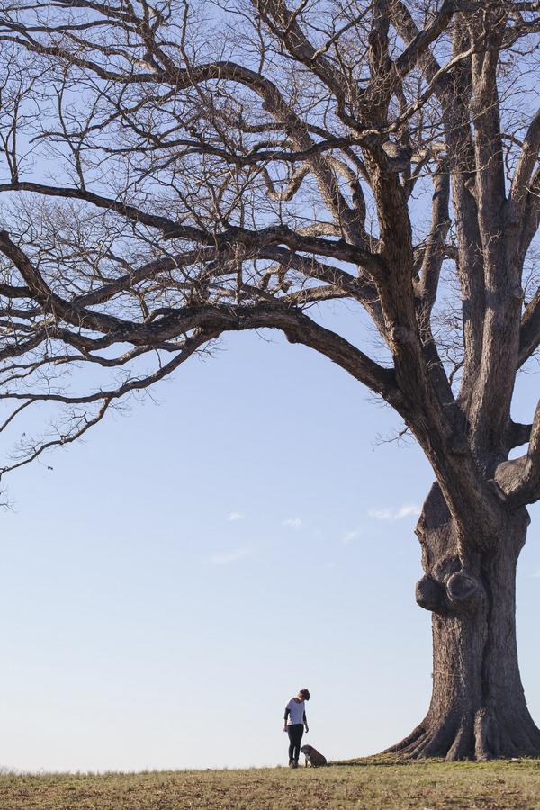 © Casey Hendrickson Photography | English-Bulldog and girl big tree,  NC on-location pet-lifestyle photography,