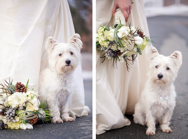 © Casey Hendrickson Photography | West-Highland-Terrier, lifestyle-dog-photography