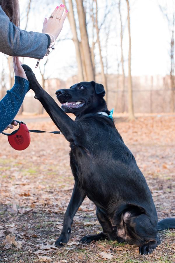 © Cassady K Photography   dog-high-5s, Westchester-lifestyle-photography