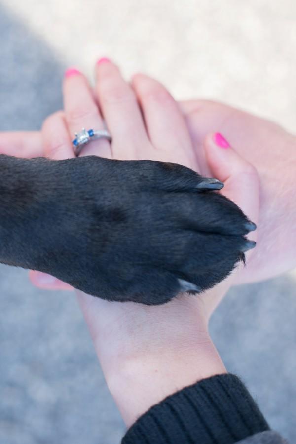 © Cassady K Photography   hands-paw-engagement-shot, engagement-pictures-dog
