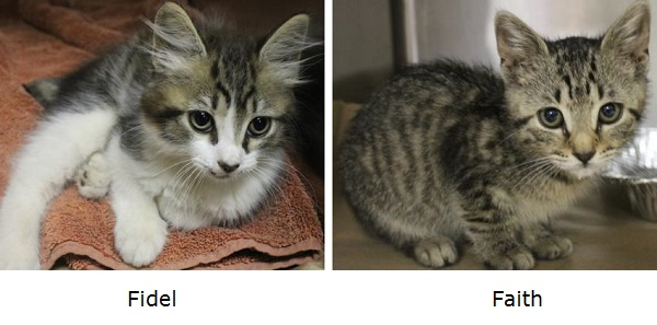 Adoptable-Kittens-Greenville County Animal Care,  SC
