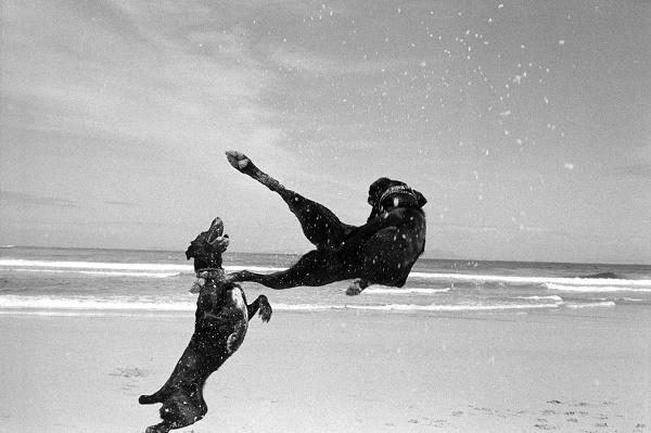 © Graeme Williams | black-white-dog-series, Cape, Graeme Williams, Pringle Bay, South , acrobatic dogs