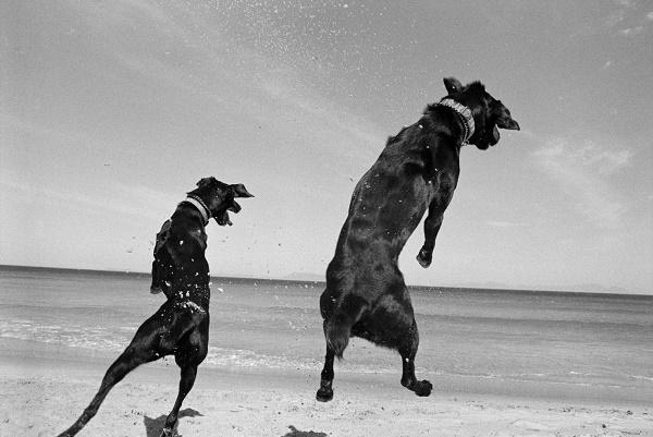 © Graeme Williams | black-white-dog-series, Cape, Graeme Williams, Pringle Bay, South