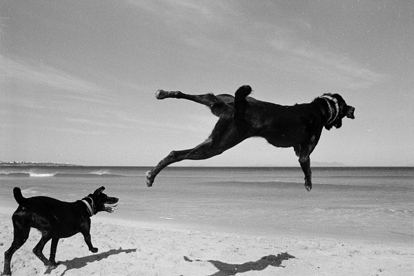 © Graeme Williams | Two Dogs, Pringle Bay, Cape, South Africa, flying dogs,