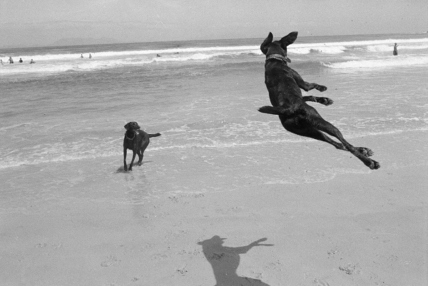 © Graeme Williams | Two Dogs, Pringle Bay, Cape, South Africa. 1999/2000