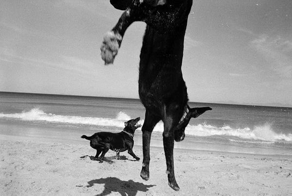 © Graeme Williams | black-white-dog-series, Cape, Graeme Williams, Pringle Bay, South Africa. 1999/2000, Two Dogs