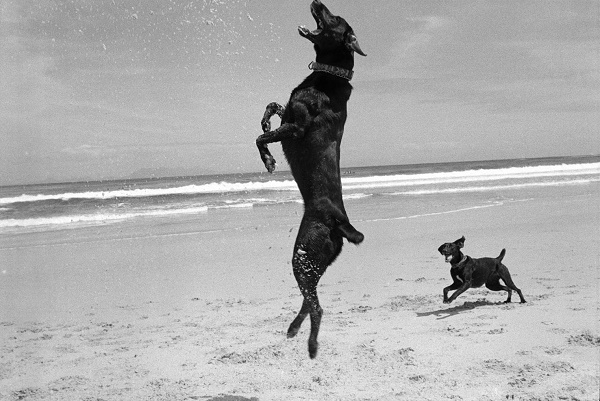 © Graeme Williams | Two Dogs, Pringle Bay, Cape, South Africa. 1999/2000, dogs playing beach