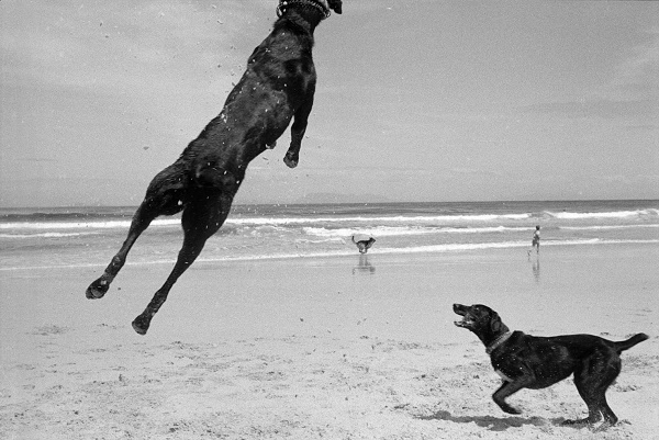 © Graeme Williams | Two Dogs, Pringle Bay, Cape, South Africa. 1999/2000, dogs-on-beach, beach-dogs