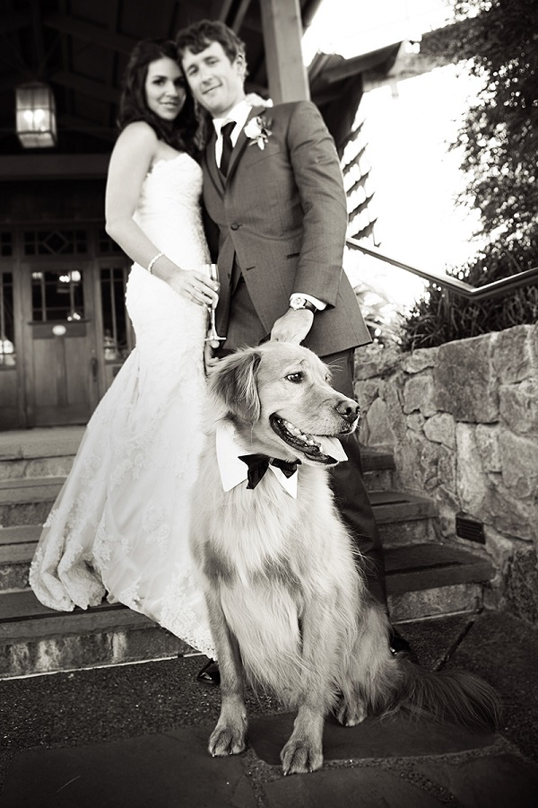 © Jules Bianchi Photography | Handsome-Golden-Retriever, bride and groom, dogs in wedding