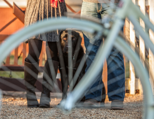 © Imagine It Photography | dog looking through bike wheel, engagement pictures with dog