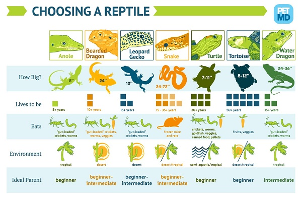 Infographic-reptile-care