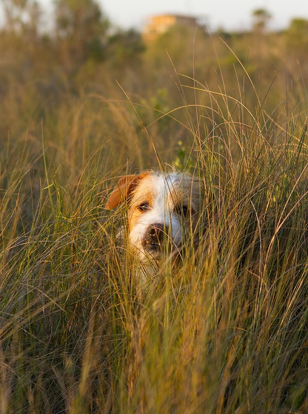 © Allison Shamrell Photography, on-location-pet-photography, mutt, mixed breed, adorable Heinz 57 dog