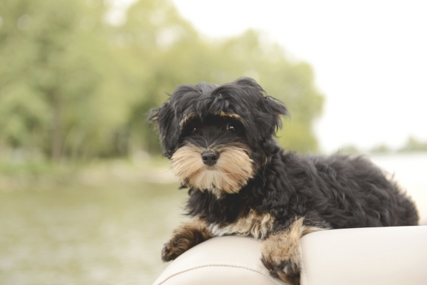 © Ashlee Mintz Photography | puppy on boat