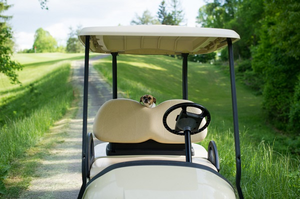 © Brittany Anderson Photography | Chihuahua-mix-golf-cart