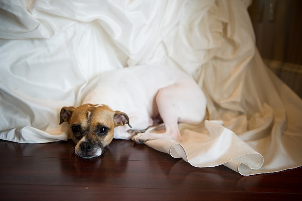 © Brittany Anderson Photography | dog-resting-on-wedding-gown, wedding dog