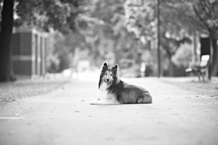 © Posh Pets Photography | Daily Dog Tag | Lifestyle-Dog-Photography