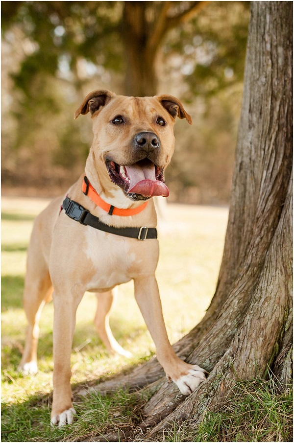© Wolfcrest Photography   from-shelter-to-forever-home, fostering-is-key, VA-pet-photography