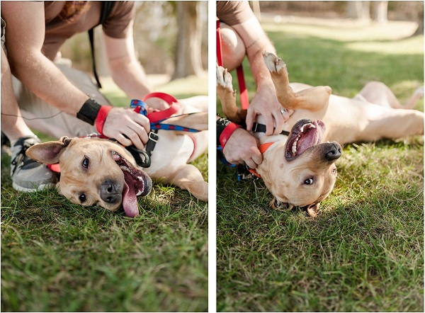 © Wolfcrest Photography    From Shelter to forever home, fostering made the difference