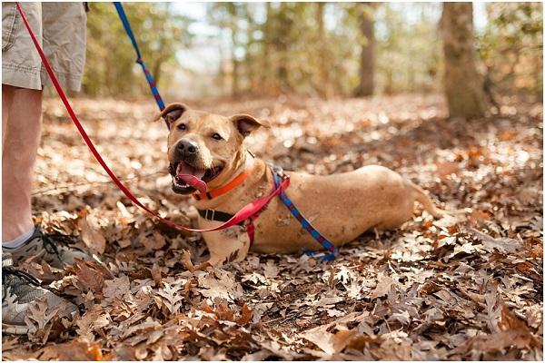 © Wolfcrest Photography | lucky-dog, best-day-ever, dog-leaves-shelter-forever, VA-pet-photographer
