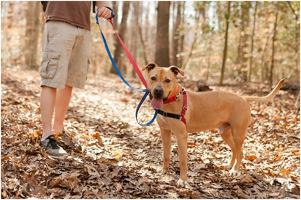 © Wolfcrest Photography | VA-lifestyle-pet-photographer, brown-mixed-breed-foster-dog