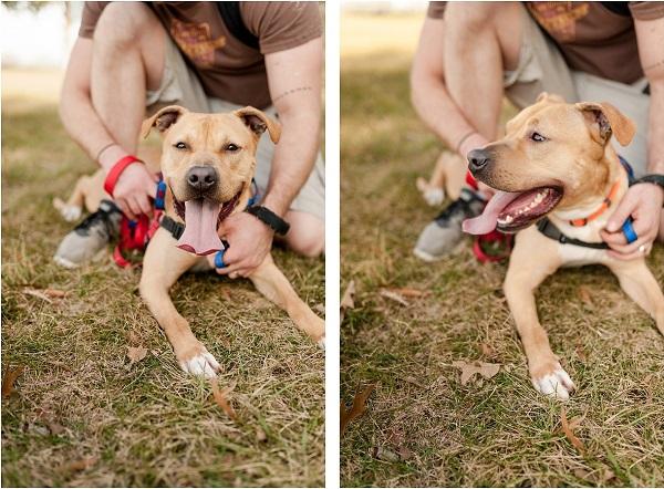 © Wolfcrest Photography  | smiling-dog, VA-pet-photography, foster-dog