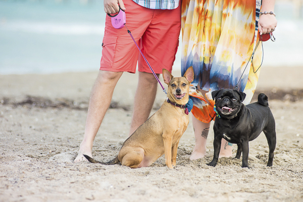 © Enduring Impressions Photography| Pug, terrier mix, beach engagement session