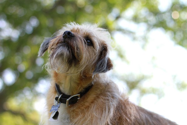 © Erin Kroll Photography | Daily Dog Tag | rescued and loved-scruffy-dog