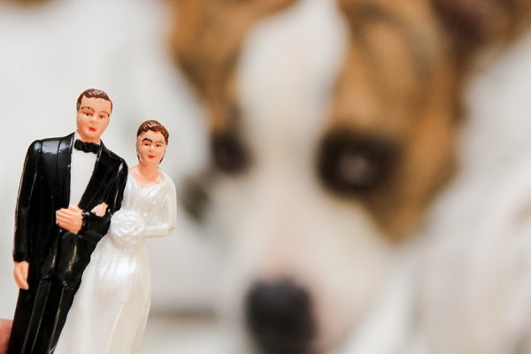 © Love My Life Photography | pittie,  wedding dog, bride, groom cake topper, dog, vintage cake topper