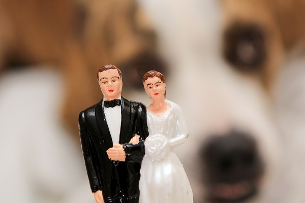 © Love My Life Photography  | vintage-wedding-cake-topper, pittie,  wedding dog