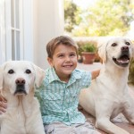 boy with yellow labs, family-dog-lifestyle-photography