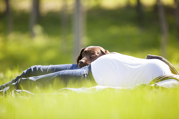 © Meghan Thomas Photography |  Maternity session, chocolate lab, on location pet photography