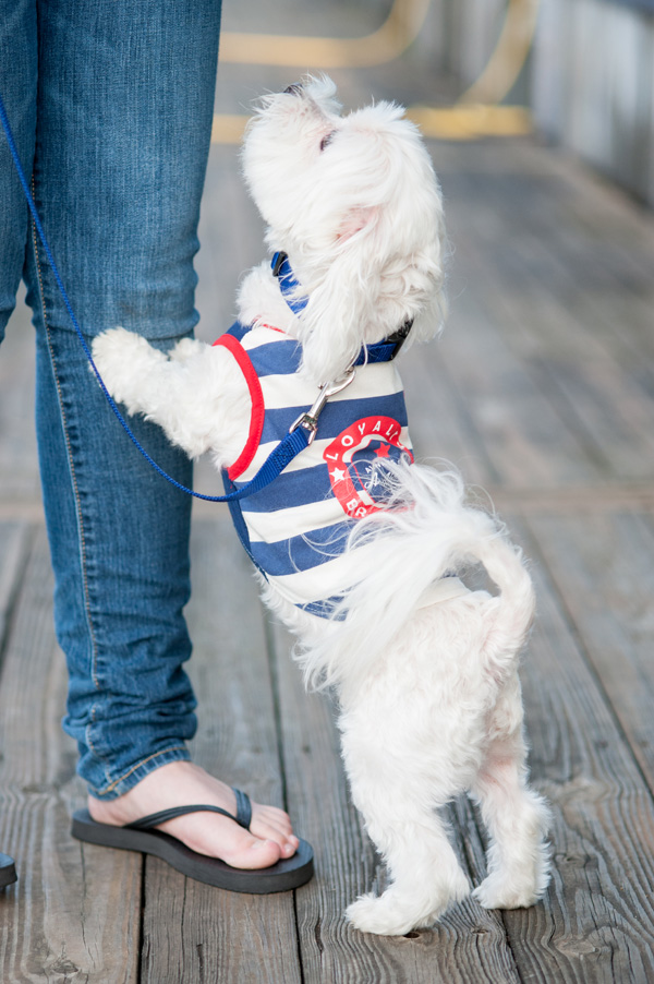 © Alice G Patterson Photography | Maltese in nautical tank, Nautical styled dog photos, Syracuse Pet Photography, Lock 24 dock