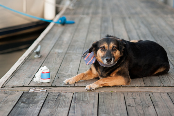 © Alice G Patterson Photography | dog wearing nautical scarf, dogs on the dock,  Syracuse dog photographer