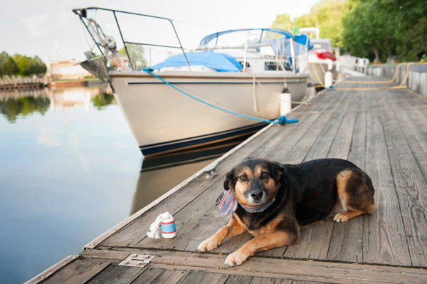 © Alice G Patterson Photography | dog wearing nautical scarf, dogs on the dock with boat in background, Paper Mill Island,, Syracuse dog photographer