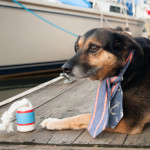 autical-Styled-Dog-Pictures-Fourth-of-July-Daily-Dog-Tag-Black-and-tan-mixed-breed-wearing-scarf