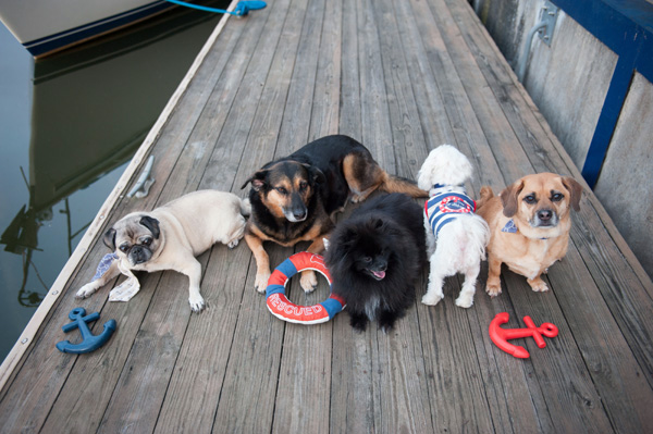 5 dogs in nautical portrait session, photographing multiple dogs