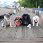 Nautical styled dog photos, Syracuse Pet Photography, Lock 24 dock