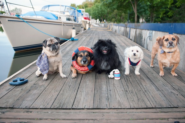 © Alice G Patterson Photography | Nautical styled dog photos, Syracuse Pet Photography, Lock 24 dock, Paper Mill Island, lifestyle dog photography