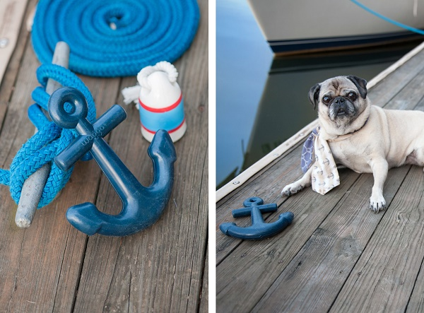 Daily Dog Tag- DIY Projects for Dog Lovers. on location product  and pet photographer