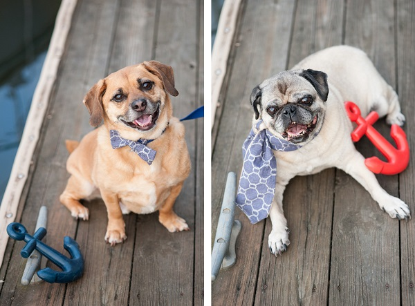 © Alice G Patterson Photography | Puggle and Pug on dock, matching bow tie and scarf for dogs, dog photography, Daily Dog Tag- DIY Projects for Dog Lovers