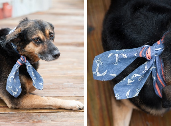 © Alice G Patterson Photography | Mixed breed dog on dock, Daily Dog Tag- DIY Projects for Dog Lovers