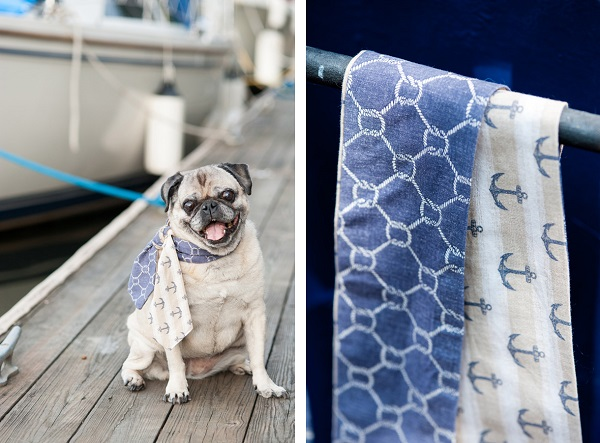 © Alice G Patterson Photography | Pug-wearing-scarf, Pug on dock, handmade scarves, Daily Dog Tag- DIY Projects for Dog Lovers