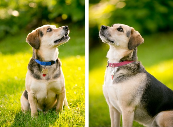 © Lindsay Docherty Photography | Daily Dog Tag | Mixed breed rescued dogs