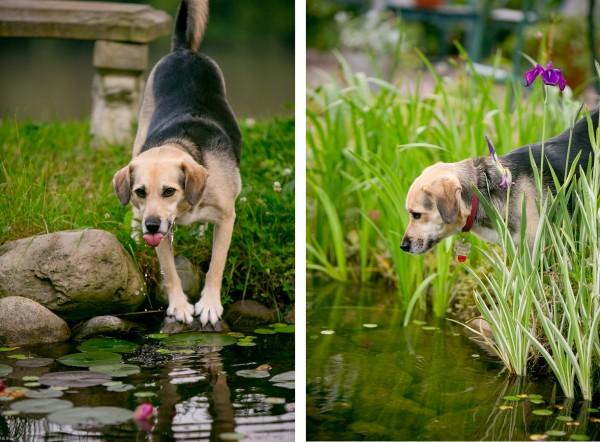 © Lindsay Docherty Photography | Daily Dog Tag |fishing