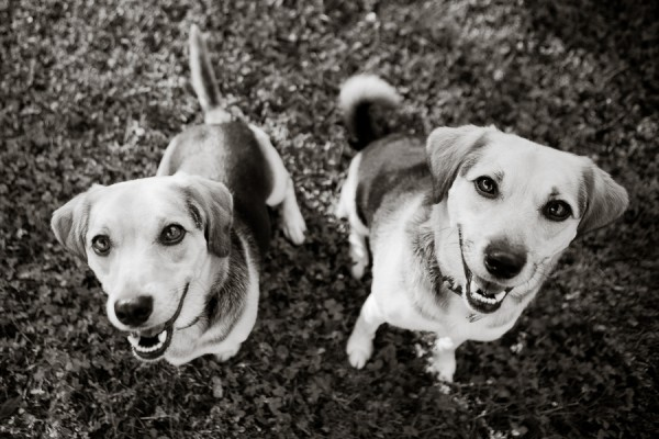 Happy Tails:  Oscar and Ruffian