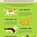 Dog Infographic: how much sleep do dogs need