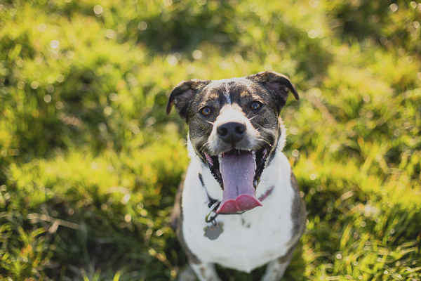 Happy Tails:  Baylee