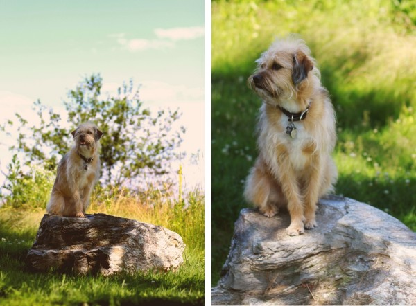 © Erin Kroll Photography | Daily Dog Tag |Maine Pet Photographer