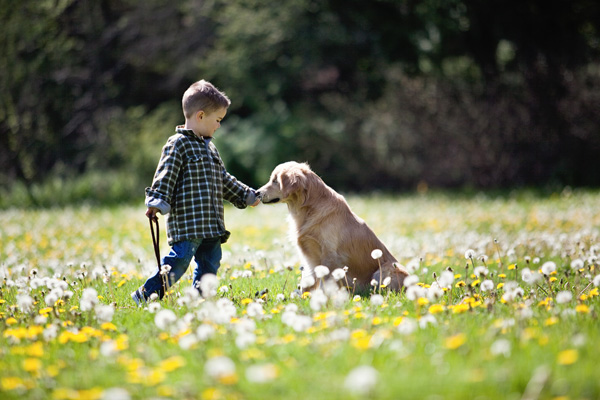 © Happy Tails Pet Photography | Daily Dog Tag |boy and his golden retriever